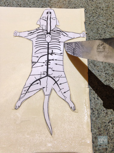 Cut out the rat skin
